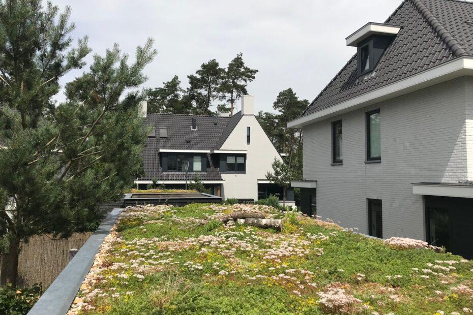 Sempergreen Sedum roof (6)