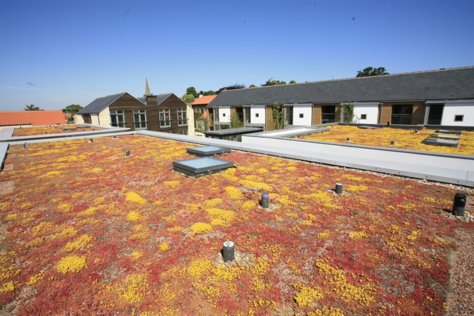 Sempergreen green roofs UK (10)
